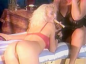 Vintage porn Peter North